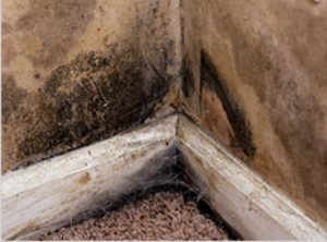 Black mold damage in a home