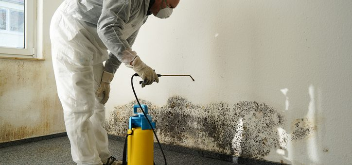 10 Signs of Mold You Can't Afford to Ignore