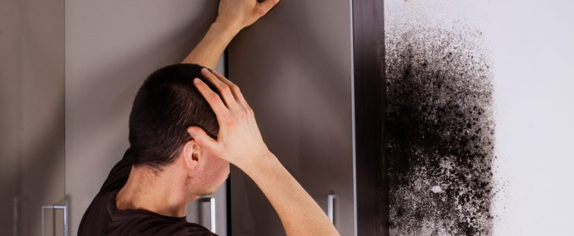 Signs of Mold in Your Home